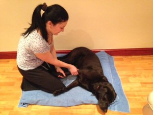 Canine Leg Treatment